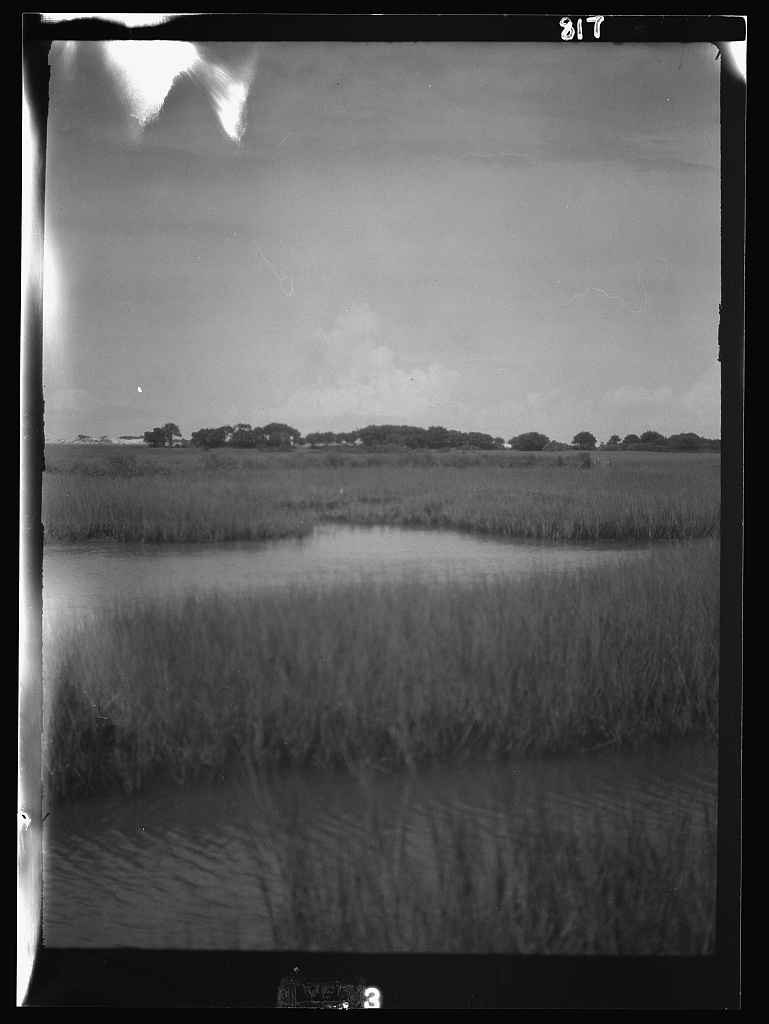 Reeds and water, New Orleans or Charleston, South Carolina area