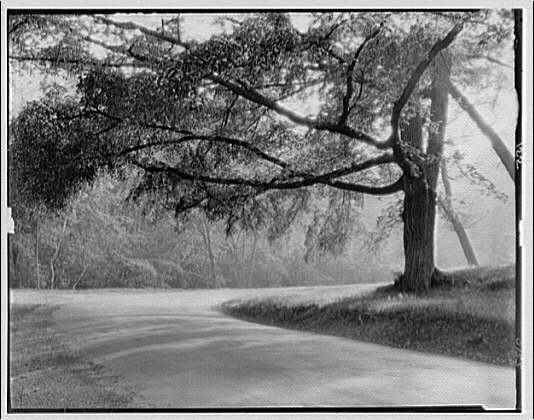 Rock Creek Park. Roadway in Rock Creek Park with large tree I