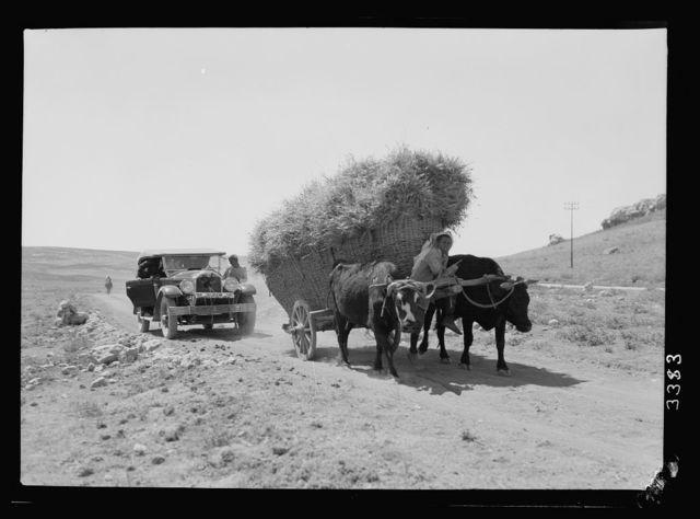 Ruins of Jerash (Gerasa). Circasian [i.e. Circassian], ox cart. Loaded with sheaves, overtaken by modern motor car