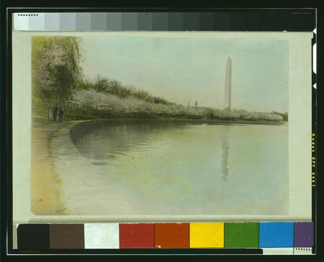 [View from Tidal Basin, with cherry blossoms, and Washington Monument in background, Washington, D.C.]
