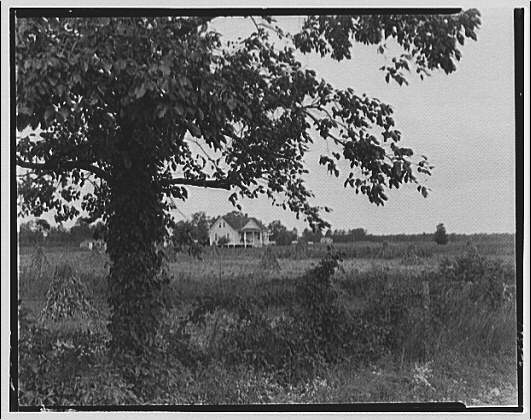 Waldorf, Maryland and vicinity. Distant view of house in field with tree in foreground