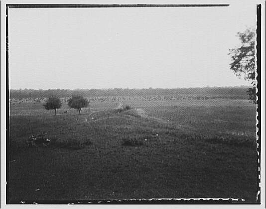 Waldorf, Maryland and vicinity. Field with two trees