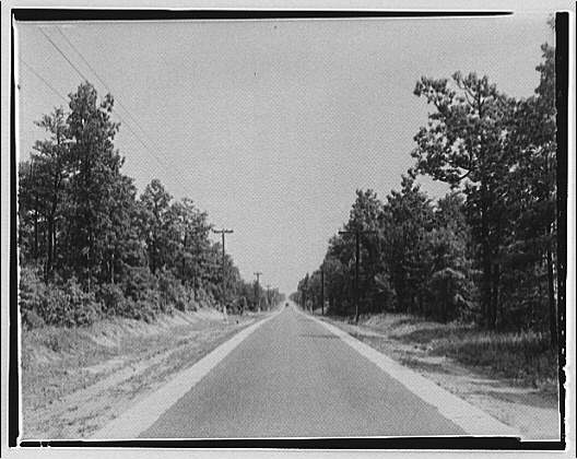 Waldorf, Maryland and vicinity. Road lined with trees III