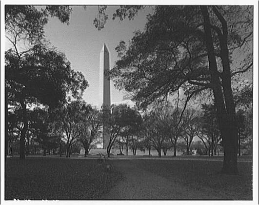 Washington Monument. View of Washington Monument from between trees I