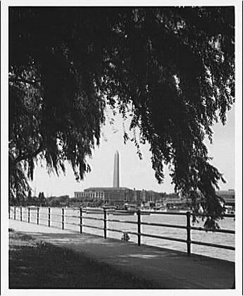 Washington Monument. View of Washington Monument from Hains Point, through willow