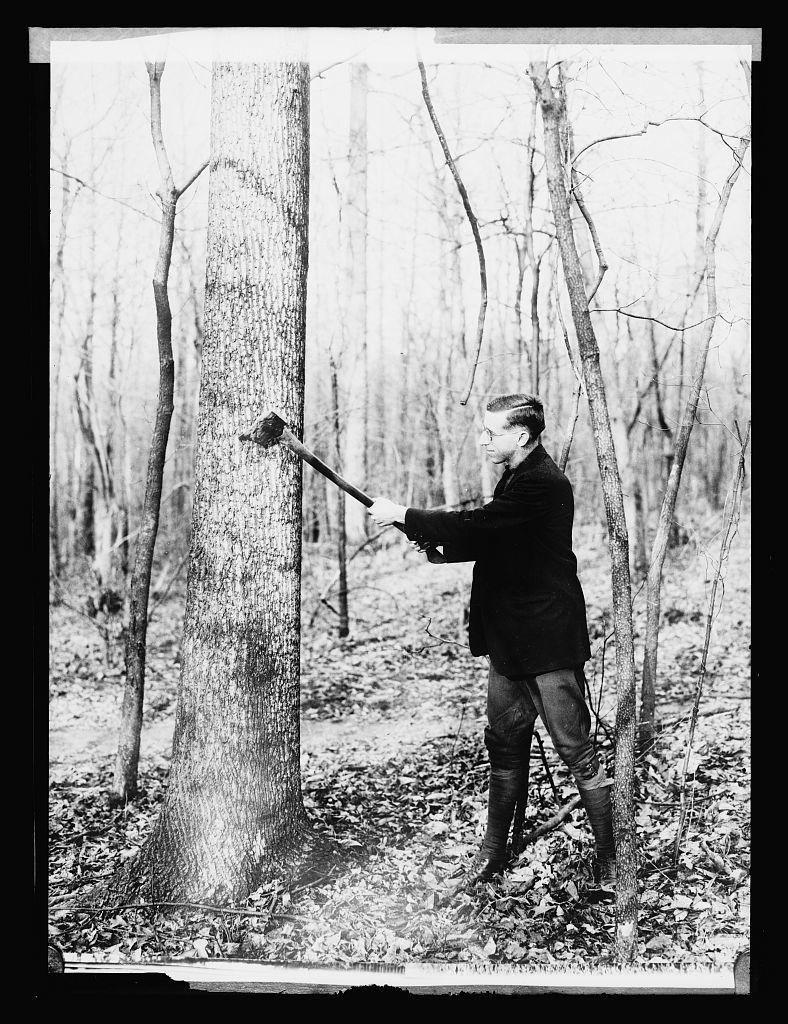 W.B. Greeley, Chief Forest Service