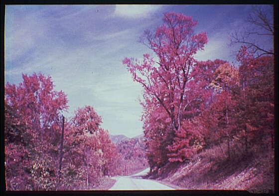 West Virginia. Highway scene II