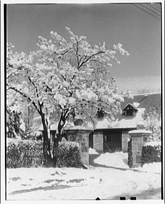 Winter scenes. House behind tree in snow