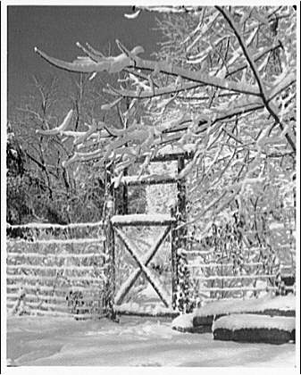 Winter scenes. Snow, trees and fence II