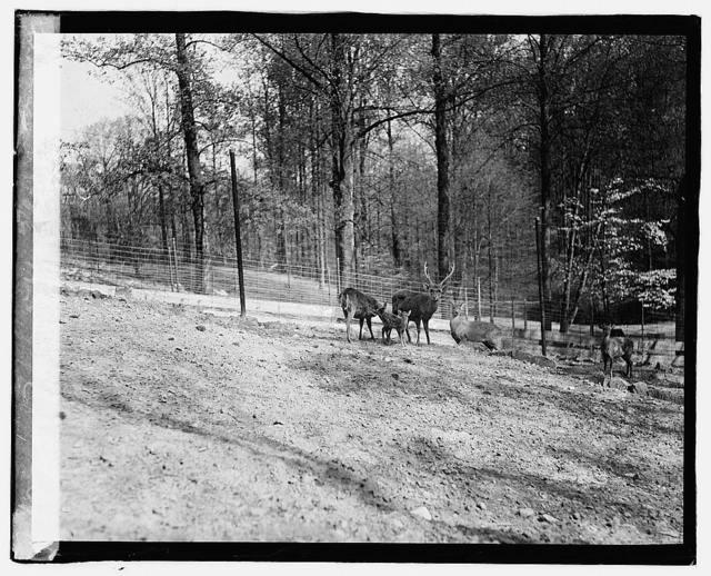 Zoo: hog, deer