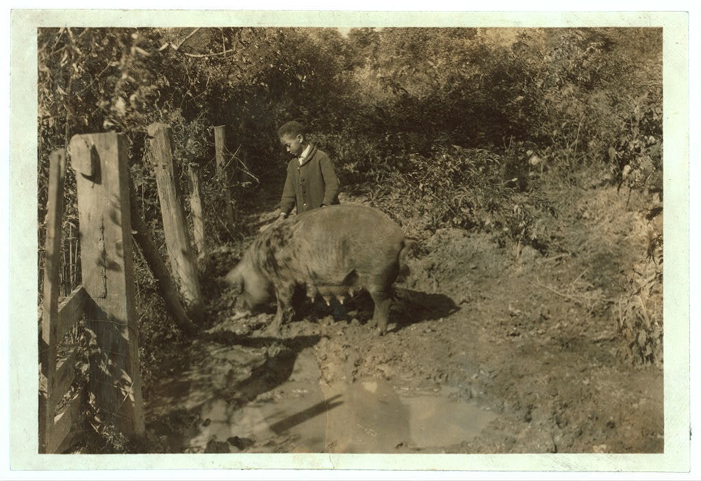 Austin Curtis and his pig project. He is a young colored boy living near the W. Va. Collegiate Institute, the State Colored Agri. College.  Location: Charleston [vicinity], West Virginia / Photo by Lewis W. Hine.