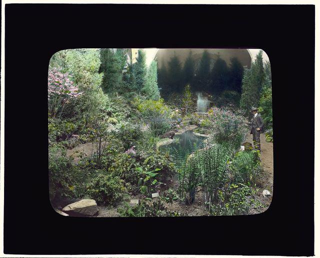 [Boston Horticultural Society Exhibition, Horticultural Hall, Massachusetts Avenue, Boston, Massachusetts. Wildflower exhibition garden]