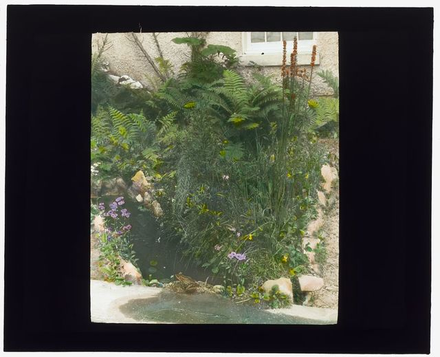 [Edgar Theodore Wherry house, 3331 Stephenson Place, N.W., Chevy Chase, Washington, D.C. Bull frog in the native plant garden]