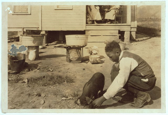 """George Cox, 13 yr. old colored boy, has just joined the 4 H Club and is raising a pig. His father is a """"renter"""" in this poor home near the W. Va. Collegiate Institute (near Charleston) the state colored agricultural college. Mr. A.W. Curtis, Agri. Agent, is helping George.  Location: Charleston [vicinity], West Virginia / Photo by Lewis W. Hine."""