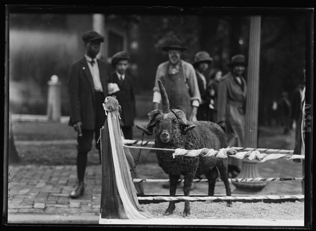 Humane Educational Society parade. Masonic ram