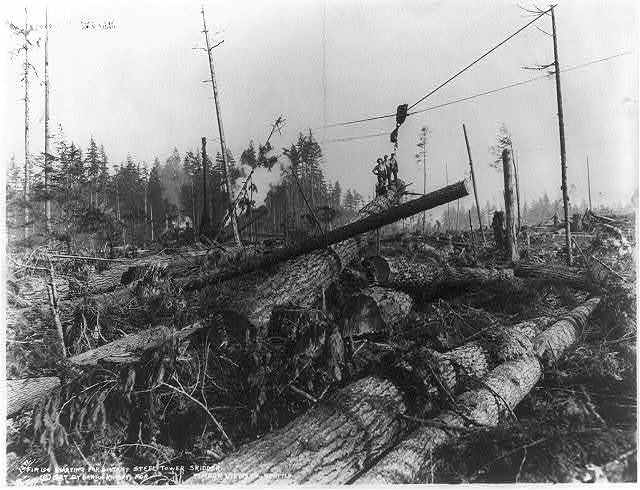 Lumbering in the cascade Mountains, near Seattle, Wash: [Ground covered with fir logs, high lead logging in Wash.]