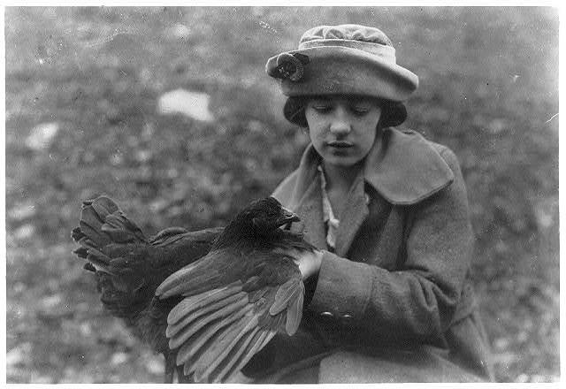 Susie Kellison, raising chickens. Examining the wing and looking for smut. 250 of these boys and girls in the Club work in this Co.  Location: Pocahontas County, West Virginia / Photo by Lewis W. Hine.