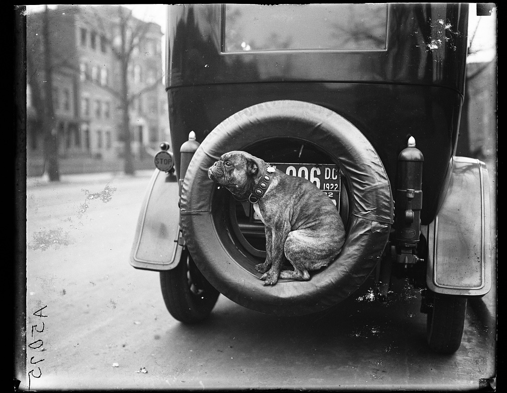 [Dog on spare tire of automobile, Washington, D.C.]