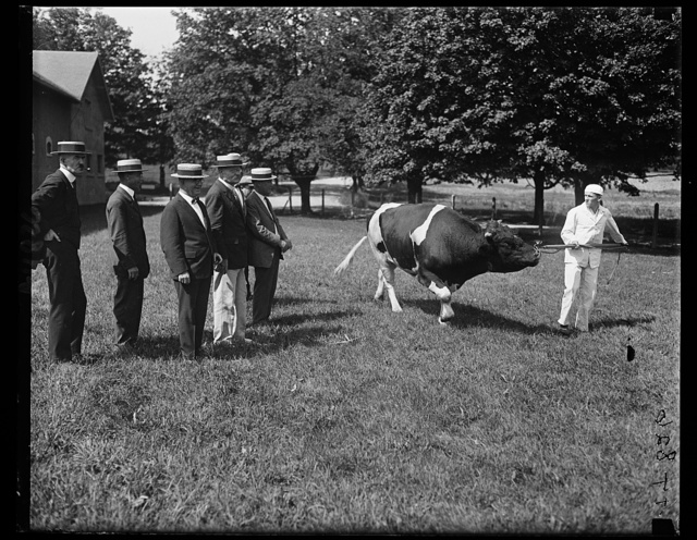 Secy. of Agric. Wallace, with Inspector Gen. Helmick of the U.S. Army inspecting the $5000 prize bull at soldiers' home