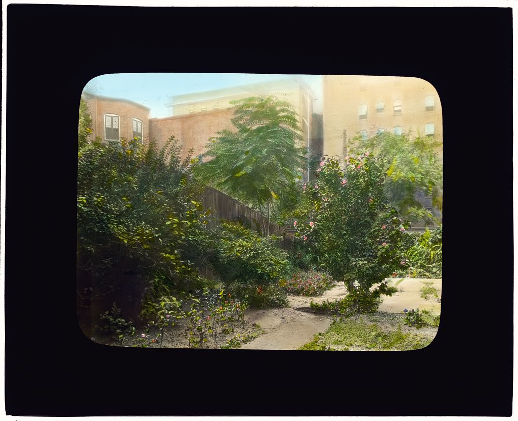 [Unidentified city garden, probably in New York, New York. Pathway with Rose of Sharon (hybiscus syriacus)]