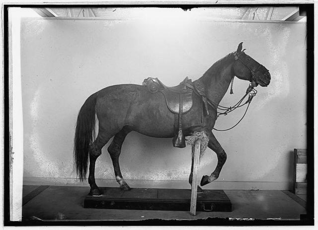 Winchester, Sheridan horse