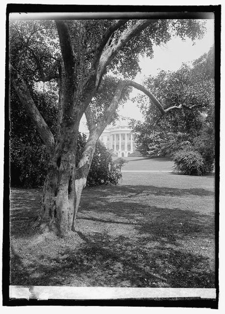 Apple tree, White House