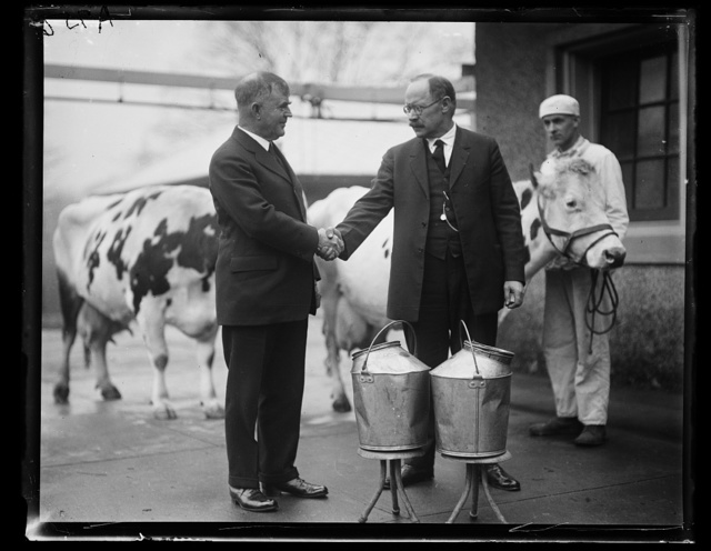 [Henry C. Wallace and Magnus Johnson with cows]