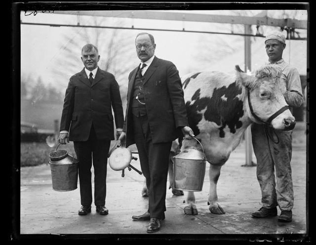[Henry C. Wallace, left and Magnus Johnson with cows]