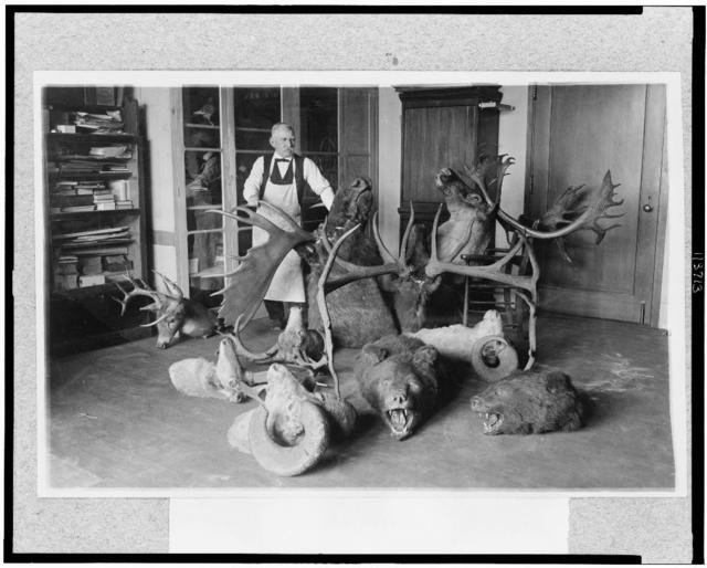 [Joseph W. Schollick, osteologist at the National Museum, with animal heads]