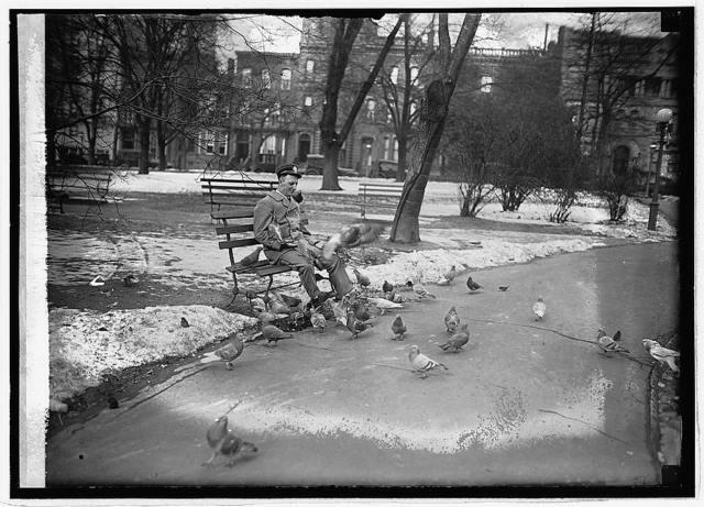 Letter carrier feeding pigeons