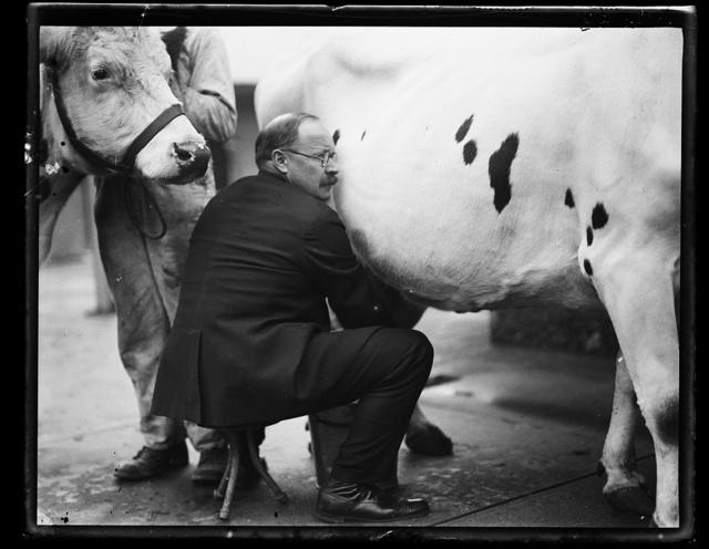 [Magnus Johnson milking cow]