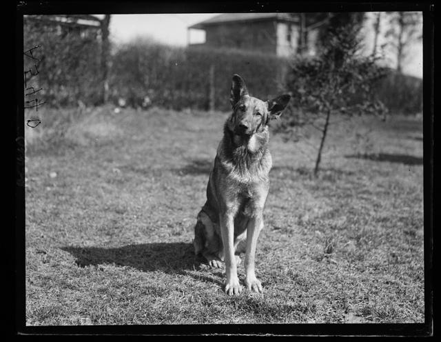 Police dog. Gus Buchholz