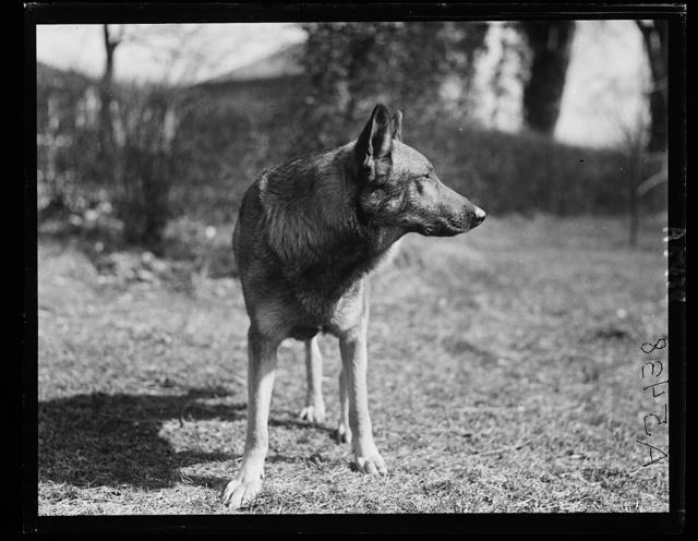 [Police dog. Gus Buchholz]