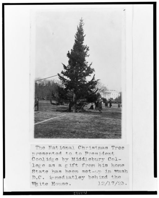 The National Christmas Tree presented to President Coolidge by Middlebury College as a gift from his home state has been set up in Wash. D.C. immediately behind the White House