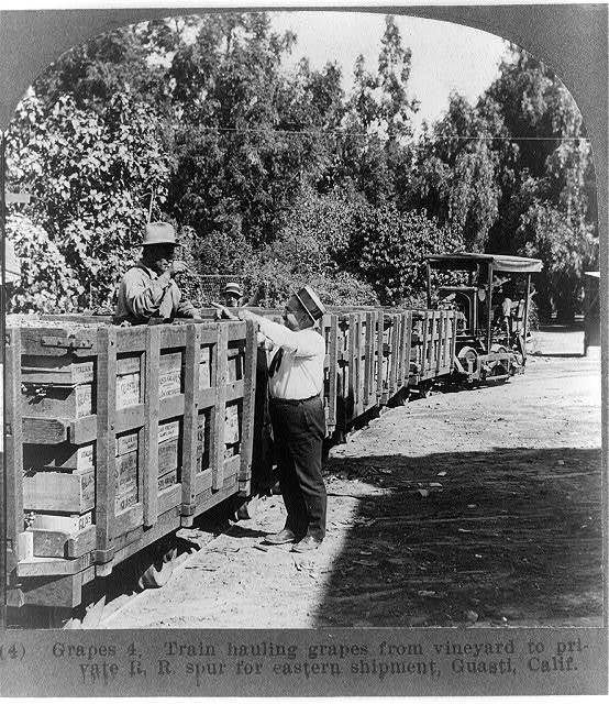 Train hauling grapes from vineyard to private R.R. spur for eastern shipment, Guasti, Calif. / photographed, copyrighted and sold by Philip Brigandi.