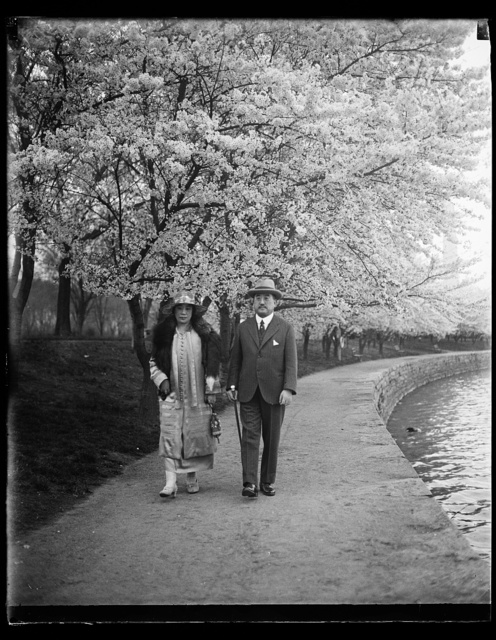 [Woman and man with Cherry blossoms, Washington, D.C.]