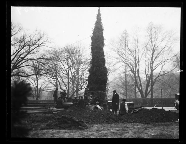 [Planting large Christmas tree?]