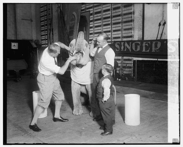"""Robert Ellen pulling tooth of baby elephant """"Futz"""""""