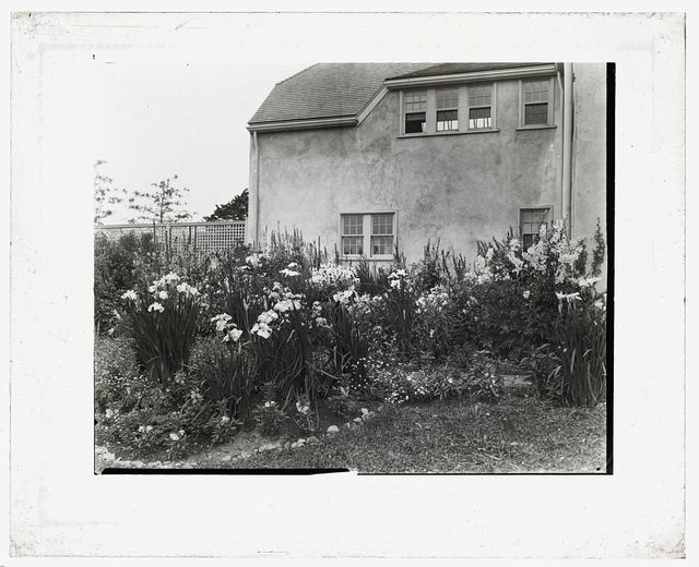[Unidentified house and garden. Iris bed]