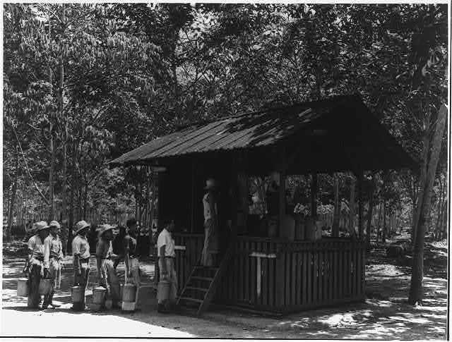[Brazil. Rubber plantations. ca. 1925.]