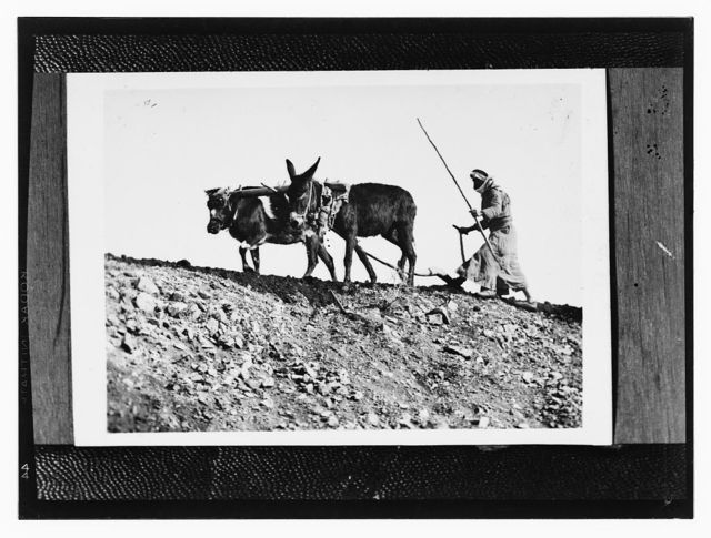 [Copy of photograph of Arab man plowing]