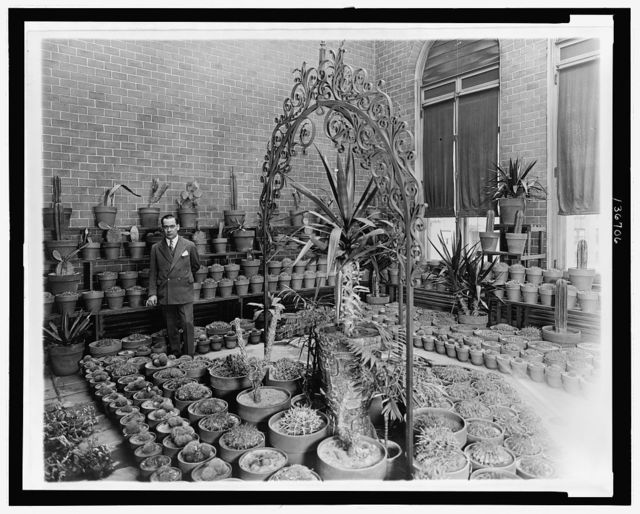 [Mexican ambassador Don Manuel Tellez standing amidst potted cacti  in the embassy's conservatory, Washington, D.C.]