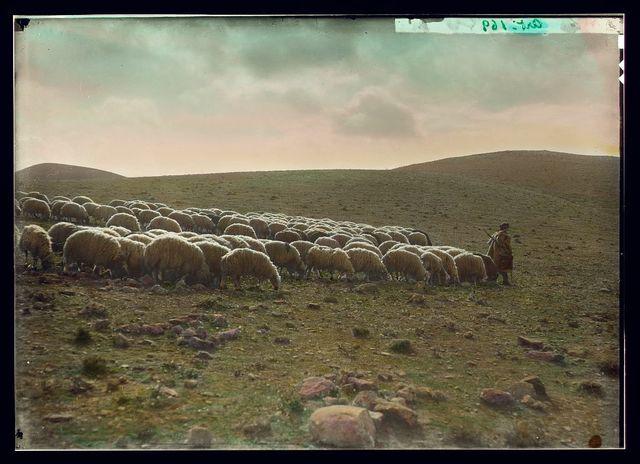 Shepherd going before his flock