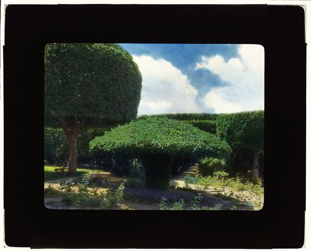 [Unidentified house, probably Italy. Topiary]