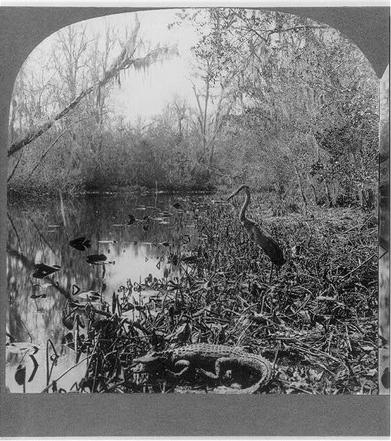 Denizens of the Ocklawaha River, Fla.