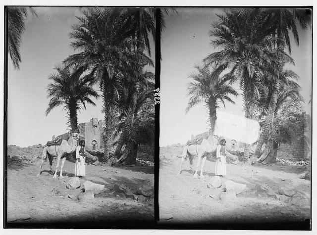 El-Azrak & Wadi Sirhan in the Arabian desert. Druse [i.e., Druze] political refugees from Jebel Druse (The Hauran). The castle of El-Azrak. Showing palms and Bedouin with camel