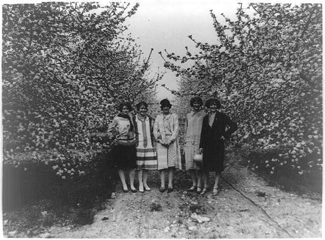 [Five women from Winchester, Va. who will be maids of honor to the Queen in the annual Shenandoah Apple Blossom Festival, under some of the blossoming trees: Julia Rene, Susan Steck, Mary Russell, Lillian Smith and Elizabeth Hollin]