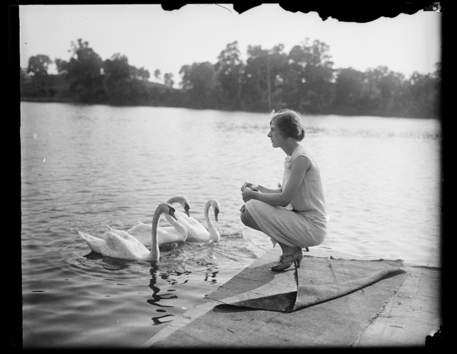 [Woman and swans]