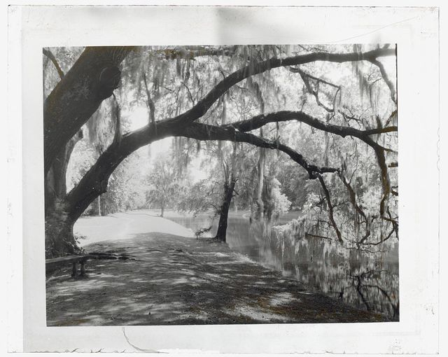 "[""Middleton Place,"" John Julius Pringle Smith house, 4300 Ashley River Road, Charleston, Dorchester County, South Carolina. River bank]"