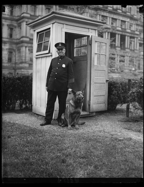 "New White House sentry. ""King Tut,"" President Hoover's big German police dog, now makes the rounds of the police sentry boxes in the White House grounds through the night. He is shown with W.S. Newton of the White House police"